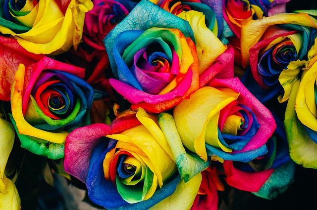 duhové růže